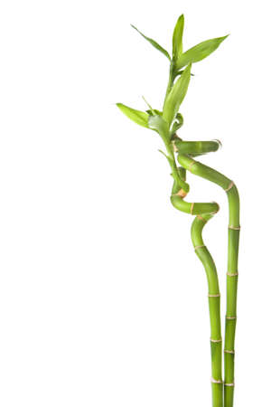 bamboo isolated Stock Photo - 6035604