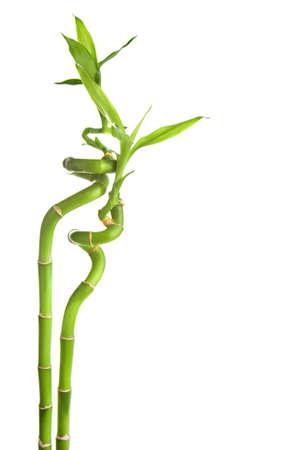 bamboo isolated Stock Photo - 6421402