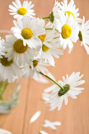bouquet of beautiful chamomiles Stock Photo - 6496003