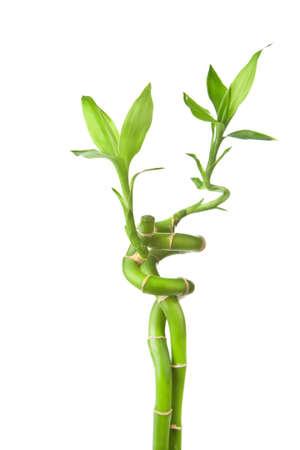 bamboo isolated Stock Photo - 6670566