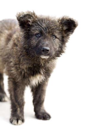 vagabundos: Lonely cachorro sin hogar