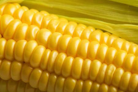 macro of fresh maize Stock Photo - 6838571