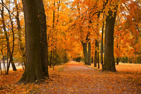 golden trees in the park  photo