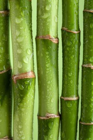 bamboo background Stock Photo - 7858501