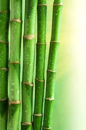 bamboo background Stock Photo - 8080814