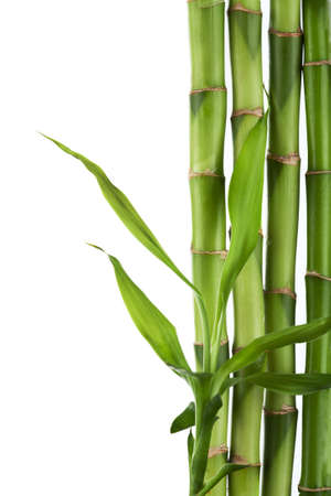 bamboo isolated Stock Photo - 8080769