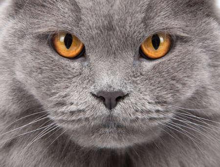 hairy closeup: cats face closeup