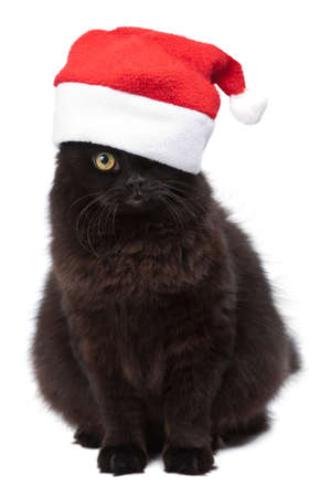 black cat in red cap isolated  photo