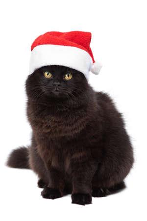 christmas cat isolated Stock Photo - 8080778