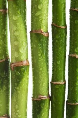 bambu: tallos de bamb� aislados