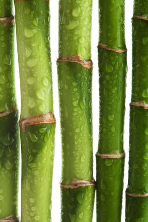 japones bambu: tallos de bamb� aislados
