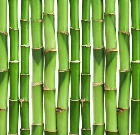 bamboo background isolated Stock Photo - 8459713