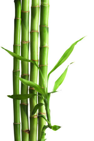 green bamboo: bamboo isolated