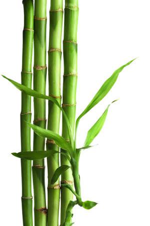 feuille de bambou: bambou isol�