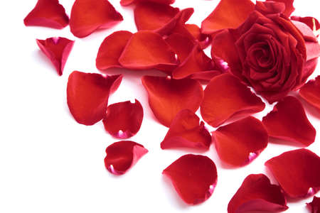 red rose petals isolated photo