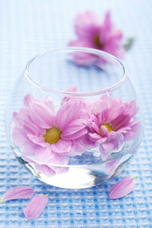pink flowers in vase photo