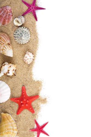 seashells: sand and sea shells isolated