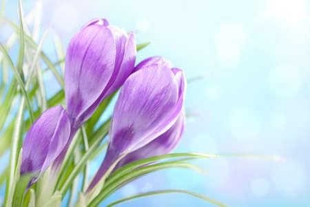 stalk flowers: crocus flower