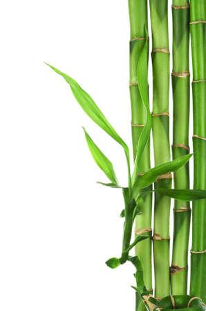 feuille de bambou: cadre de bambou isol�  Banque d'images