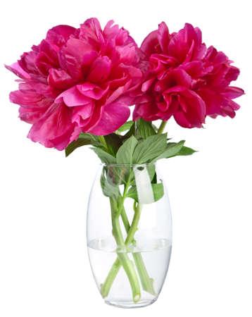 vase: peony in vase isolated