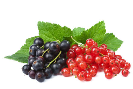 redcurrant: blackcurrant and redcurrant isolated
