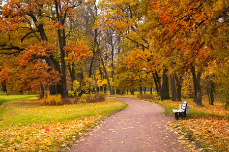fall scenery: autumn in park