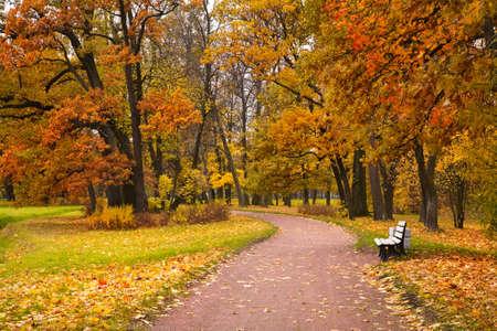banc de parc: l'automne dans le parc