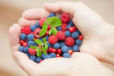 hands holding fresh berries Stock Photo - 12007461