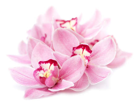 pink orchid flowers isolated  Stock Photo