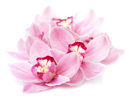 roze orchidee bloemen geà ¯ soleerd
