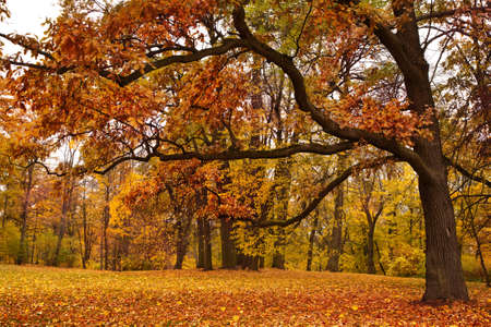 őszi parkban Stock fotó