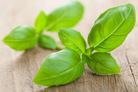 albahaca: hojas de albahaca fresca Foto de archivo