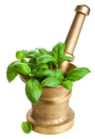 basil in mortar isolated Stock Photo - 17313561