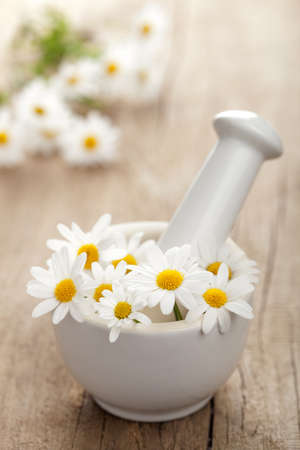 camomile flowers in mortar  photo