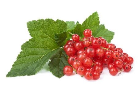 red currant: fresh redcurrant isolated