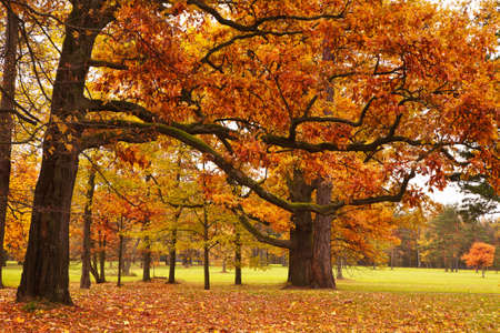 autumn trees in park photo