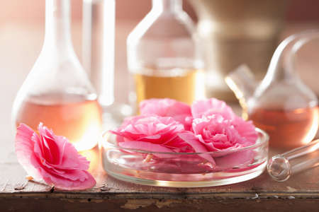 begonia: aromatherapy and alchemy with pink flowers