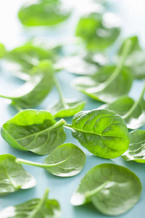 'baby spinach': baby spinach leaves over blue background