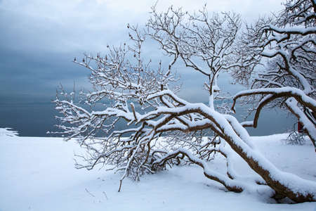 Norwegian winter fjord landscape with tree Stock Photo