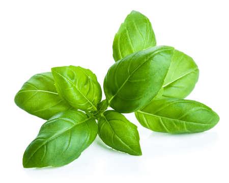 albahaca: hojas de albahaca aislados