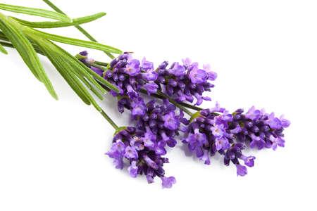 geïsoleerd lavendel bloem Stockfoto