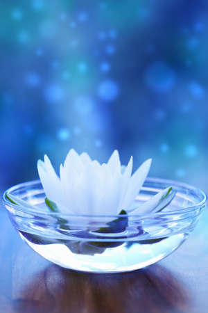 white water lilly flower over blue photo