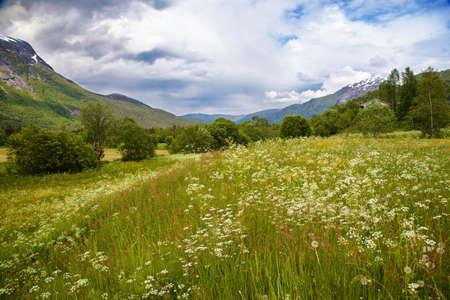 scandinavian landscape: Norwegian summer landscape