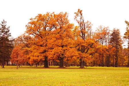 autumn trees: colorful autumn trees in park Stock Photo