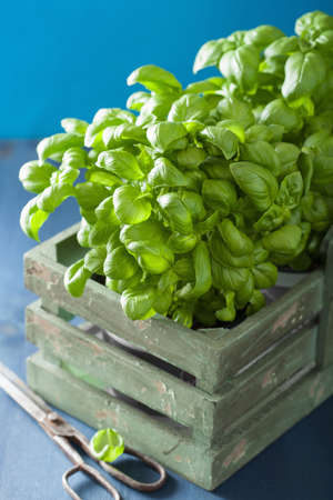 spicy cooking: fresh basil herb in rustic box Stock Photo