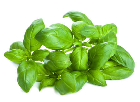 basil: fresh basil leaves herb isolated Stock Photo