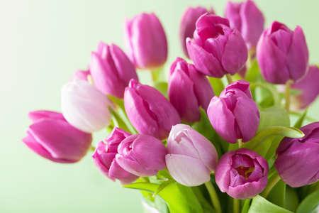 美しい紫のチューリップの花背景 写真素材