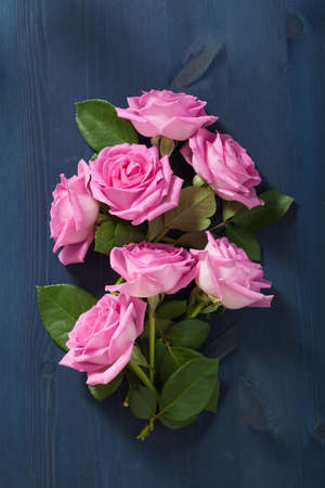 blue background: pink rose flowers over dark blue background
