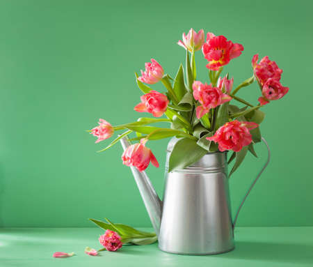 flowers bouquet: beautiful pink tulip flowers bouquet in watering can Stock Photo
