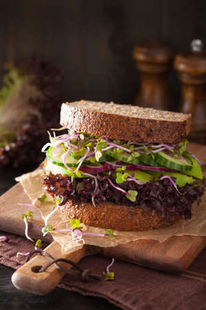 sprouts: avocado cucumber sandwich with onion and radish sprouts